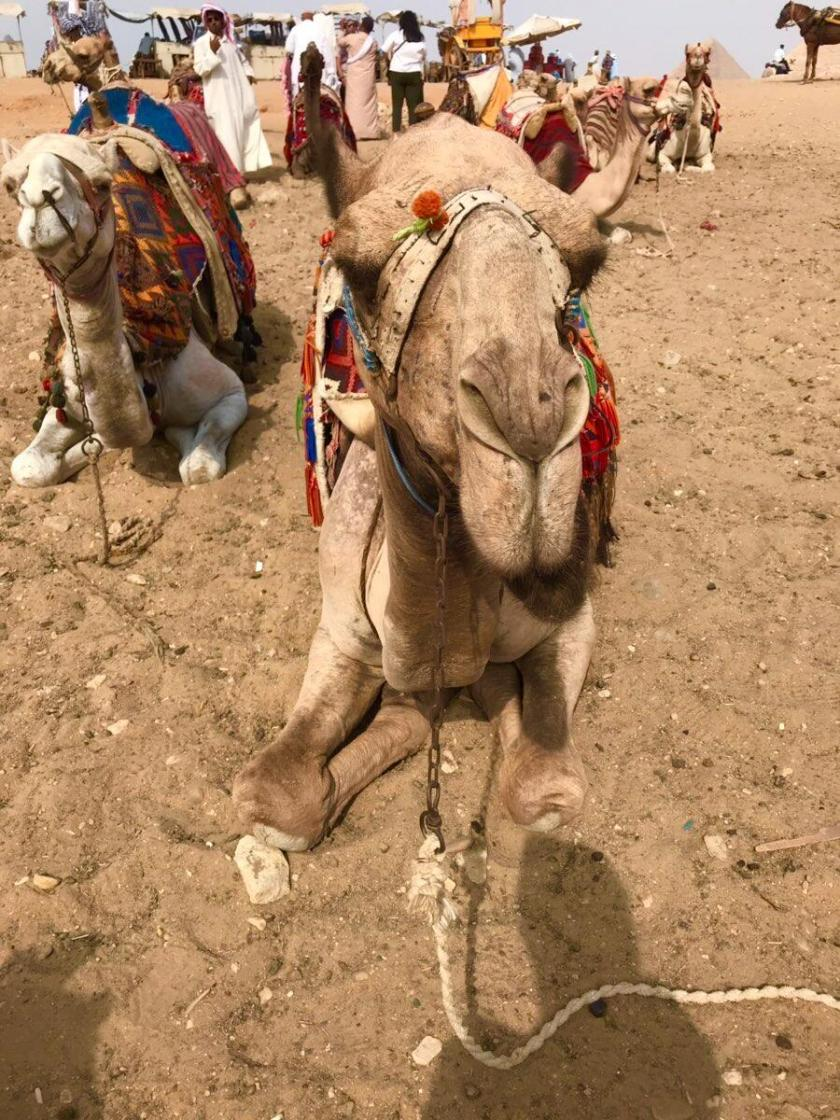 vans camel